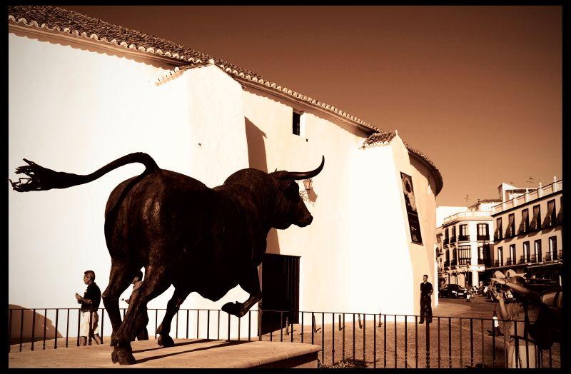 toro andalusia